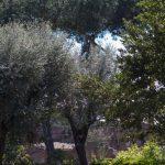 foro_romano_135
