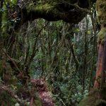 malaisie_cameron_highlands_109