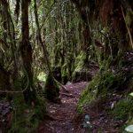 malaisie_cameron_highlands_116