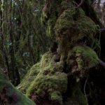 malaisie_cameron_highlands_120