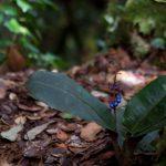 malaisie_cameron_highlands_122