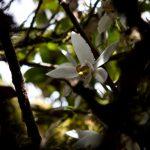 malaisie_cameron_highlands_125