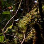 malaisie_cameron_highlands_130