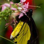 malaisie_cameron_highlands_143