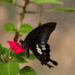 malaisie_cameron_highlands_147