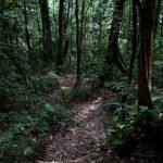 malaisie_cameron_highlands_173