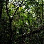 malaisie_cameron_highlands_175