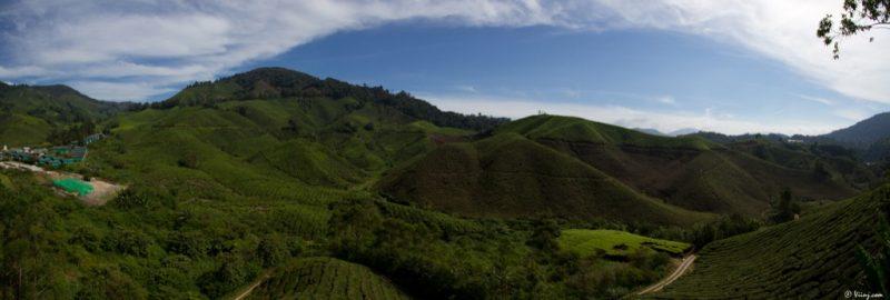 malaisie_cameron_highlands_188