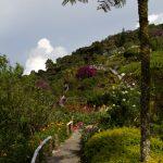 malaisie_cameron_highlands_37