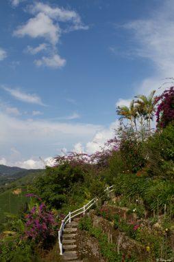 malaisie_cameron_highlands_40