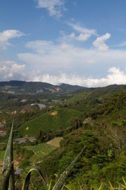 malaisie_cameron_highlands_43