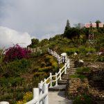 malaisie_cameron_highlands_45