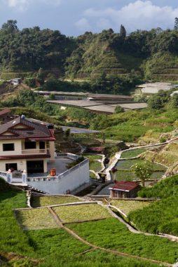 malaisie_cameron_highlands_48