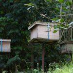 malaisie_cameron_highlands_52