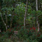 malaisie_cameron_highlands_56