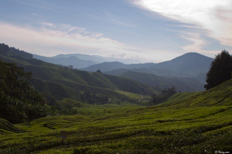 malaisie_cameron_highlands_60