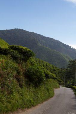 malaisie_cameron_highlands_62