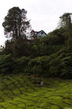 malaisie_cameron_highlands_65