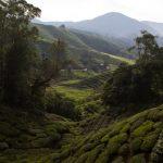 malaisie_cameron_highlands_73