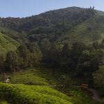 malaisie_cameron_highlands_77
