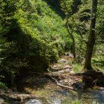 castans_sentier_ruisseaux_13