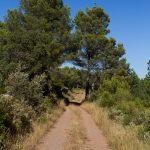 caunes_minervois_plateau_matte_14