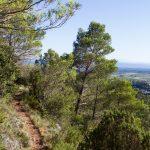 caunes_minervois_route_moutons_18