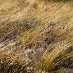 caunes_minervois_route_moutons_3