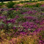 pic_nore_sentier_panoramas_37