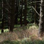 pic_nore_sentier_panoramas_4