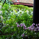 thailande_bangkok_186