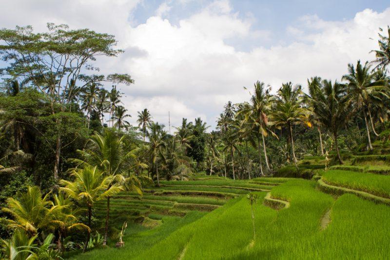voyage-indonesie-gunung-kawi-24