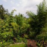 voyage-indonesie-ubud-bucu-view-1