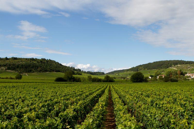 chateau-rochepot-bourgogne-40