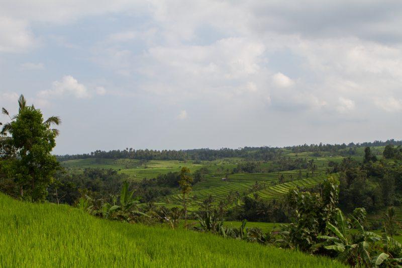 voyage-indonesie-jatiluwih-1