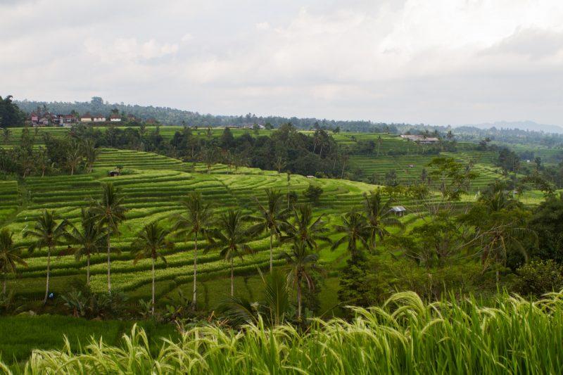 voyage-indonesie-jatiluwih-11