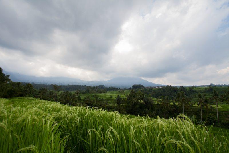 voyage-indonesie-jatiluwih-18