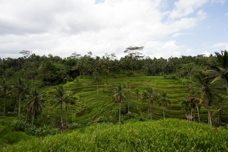 voyage-indonesie-tegallalang-1