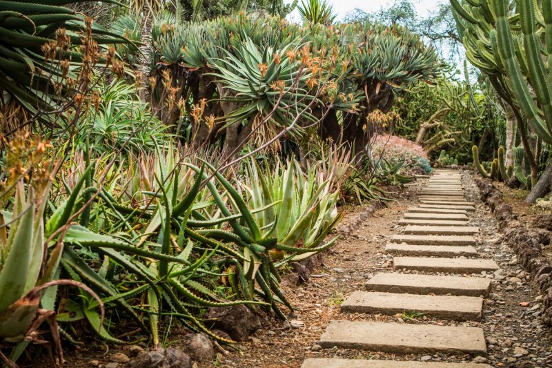 portugal-madere-funchal-jardim-botanico-32