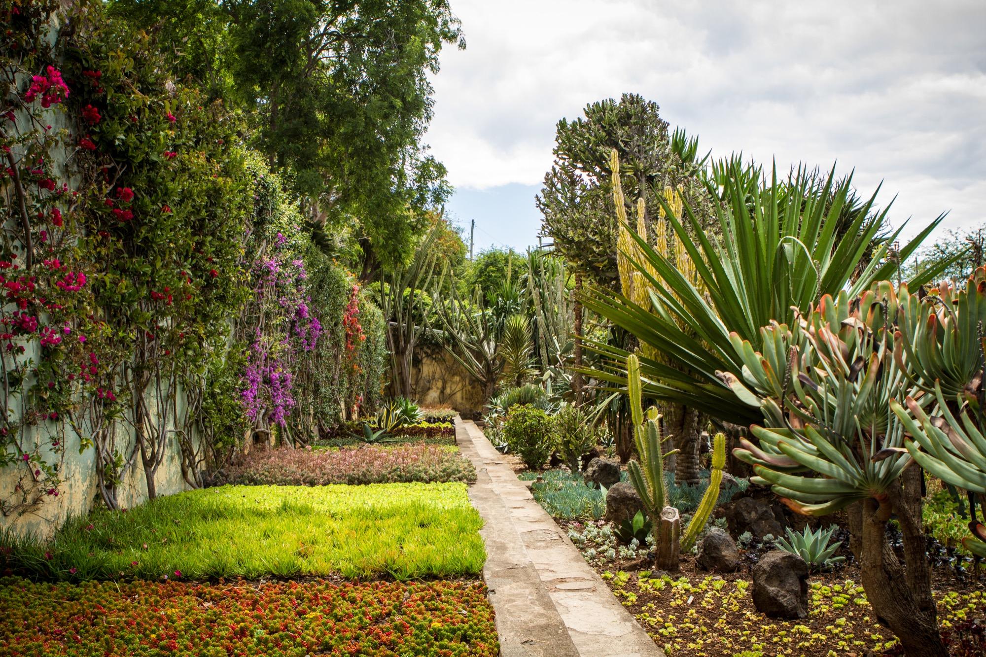 blogues le jardin botanique de funchal ma plan te