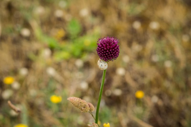 balade-bretagne-golfe-morbihan-quiberon-13