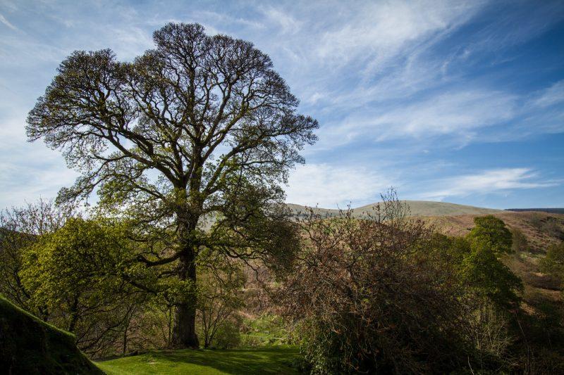 roadtrip-uk-ecosse-highlands-campbell-9