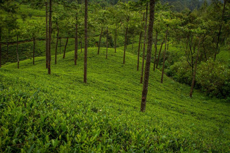 sri-lanka-nuwara-elya-12