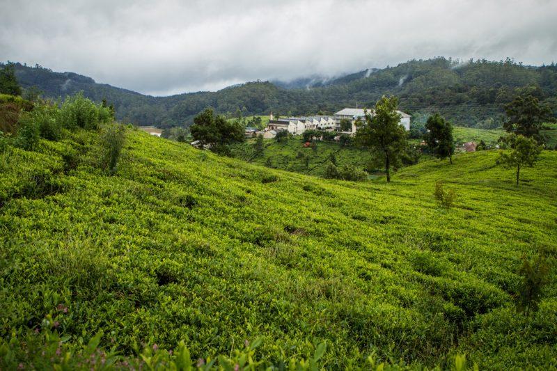 sri-lanka-nuwara-elya-36